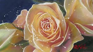Dominic Pangborn rose