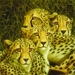 Andrew Bone cheetah, mother's day