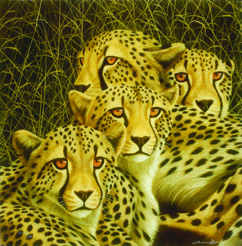 Andrew Bone cheetah, mother's day