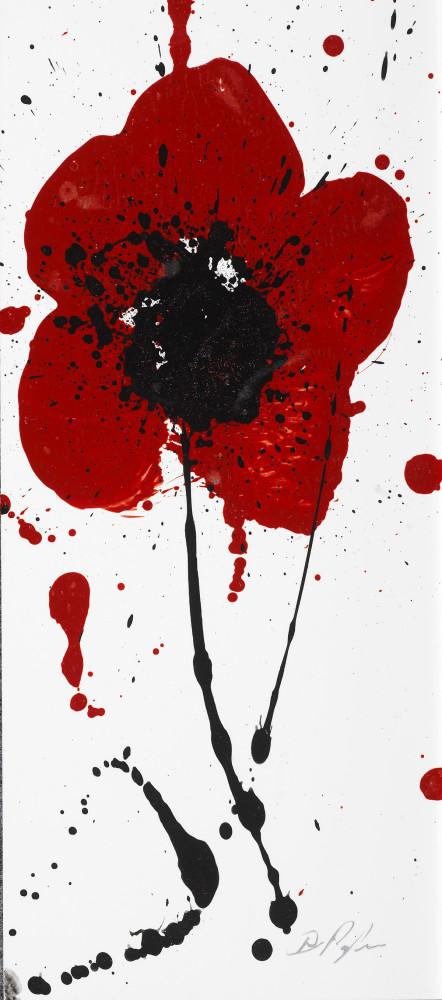Dominic Pangborns Poppy Flower Paintings