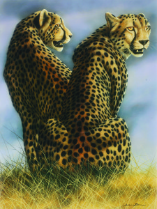 andrew bone cheetah park west gallery