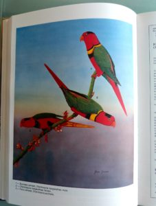 One of Stevenson's drawings in the Atlas of Parrots