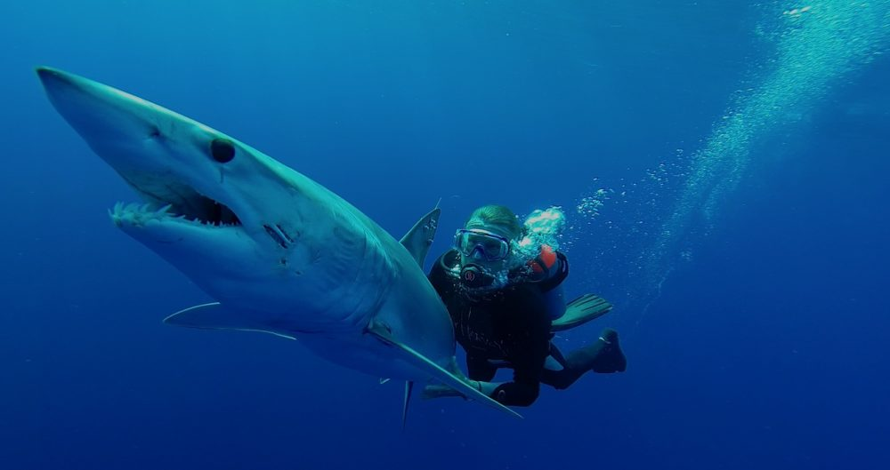 Guy Harvey diving with a mako shark (Photo courtesy of Greg Jacoski)
