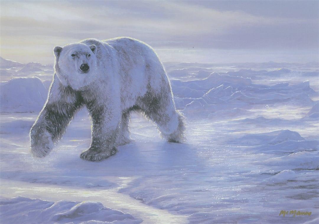 Polar Bear walking across a snowy landscape